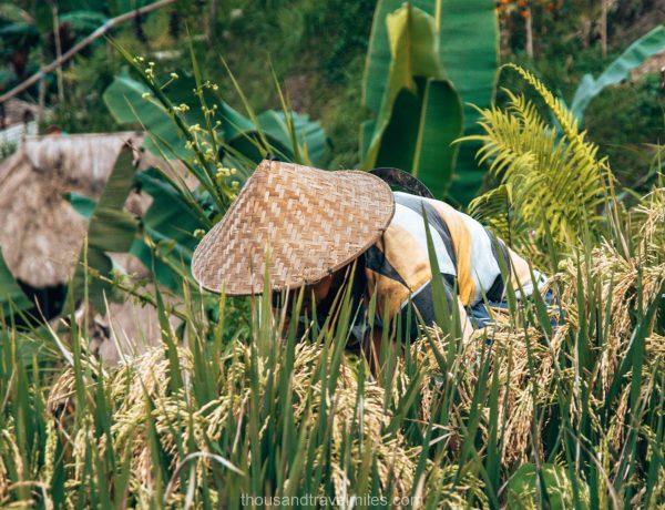 Tegalalang rice Terrace - Ubud - Bali - Thousandtravelmiles