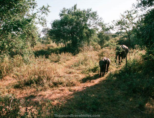 Udawalawe National Park Thousandtravelmiles